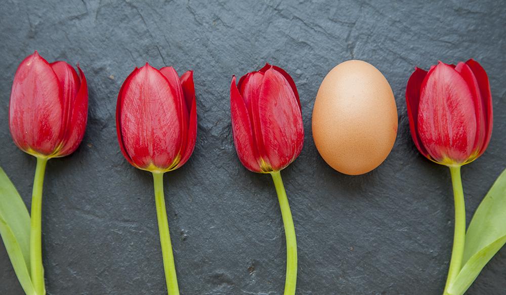 Osterei und Tulpen © Sabine Pallaske Fotografie